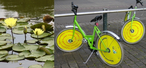 Water lilies in the Mason Park wetlands (Photo: Milt Gray), public bikes (Wikimedia Commons)