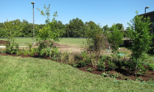 Rain garden planted by Girl Scouts of San Jacinto Council