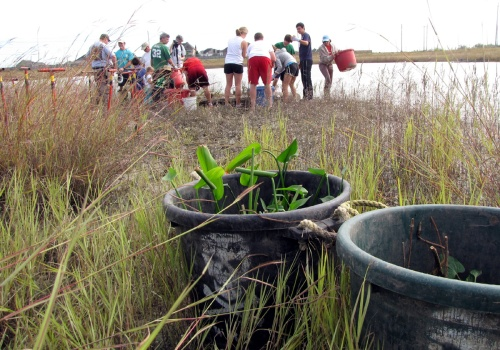 Floating Wetlands--plants