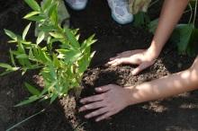 Girl Scouts plant a rain garden