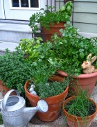 Many herbs grow well here in winter