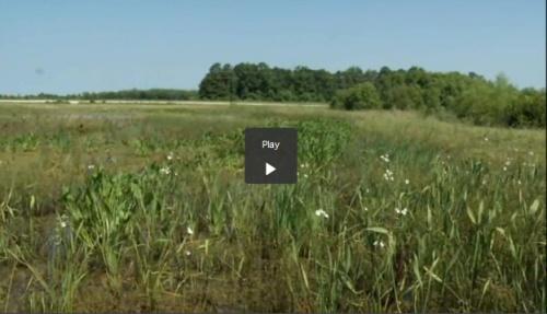 NewBernNC_wetland
