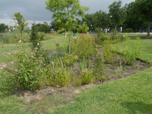 Heritage Park Rain Garden 3.jpg