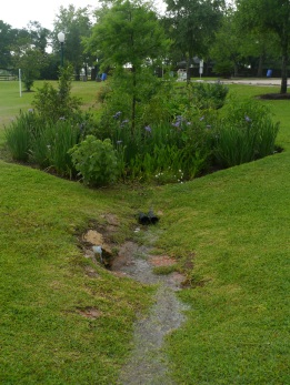 LC rain garden filters stormwater from parking lot
